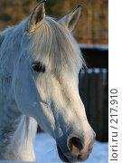 Купить «Морда белой лошади крупным планом», фото № 217910, снято 5 февраля 2008 г. (c) Карасева Екатерина Олеговна / Фотобанк Лори
