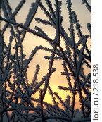 Купить «Зимний закат», фото № 218538, снято 21 января 2018 г. (c) ElenArt / Фотобанк Лори