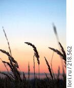 Купить «Закат в поле», фото № 218562, снято 21 января 2018 г. (c) ElenArt / Фотобанк Лори