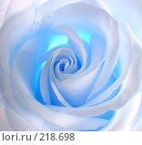 Бело-голубая роза. Стоковое фото, фотограф ElenArt / Фотобанк Лори