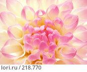 Купить «Красивый розовый цветок», фото № 218770, снято 17 октября 2019 г. (c) ElenArt / Фотобанк Лори