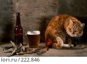 Купить «Натюрморт с кошкой, пивом и рыбой», фото № 222846, снято 30 сентября 2007 г. (c) Cветлана Гладкова / Фотобанк Лори