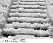 Купить «Алмазный блеск весны», фото № 223302, снято 8 марта 2008 г. (c) Анатолий Теребенин / Фотобанк Лори