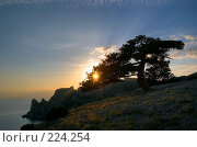 Купить «Сосна на склоне горы на фоне заката», фото № 224254, снято 17 августа 2018 г. (c) Олег Титов / Фотобанк Лори