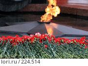 Возложение цветов к Вечному огню (2008 год). Стоковое фото, фотограф Карасева Екатерина Олеговна / Фотобанк Лори