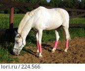 Купить «Белая лошадь», фото № 224566, снято 14 июня 2006 г. (c) Карасева Екатерина Олеговна / Фотобанк Лори