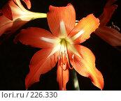 Купить «Цветок в лучах солнца», фото № 226330, снято 7 февраля 2006 г. (c) VPutnik / Фотобанк Лори