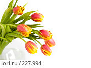 Купить «Букет красно-желтых тюльпанов в стеклянной вазе на белом фоне», фото № 227994, снято 8 марта 2008 г. (c) Ольга Хорькова / Фотобанк Лори