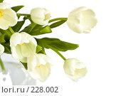 Купить «Букет белых тюльпанов в вазе», фото № 228002, снято 8 марта 2008 г. (c) Ольга Хорькова / Фотобанк Лори