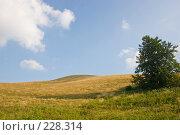 Купить «Холмистый пейзаж. Поле и облачное небо.», фото № 228314, снято 19 августа 2007 г. (c) Harry / Фотобанк Лори