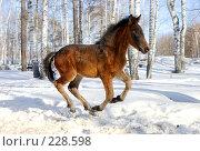 Купить «Молодой конь быстро мчится», фото № 228598, снято 8 марта 2008 г. (c) Дмитрий Ощепков / Фотобанк Лори