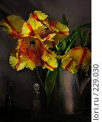 Купить «Тюльпаны», фото № 229030, снято 20 марта 2006 г. (c) Светлана Шушпанова / Фотобанк Лори