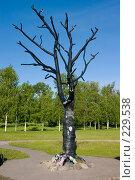 Купить «Карелия. Дерево желаний в Петрозаводске.», фото № 229538, снято 10 июня 2007 г. (c) Инга Лексина / Фотобанк Лори