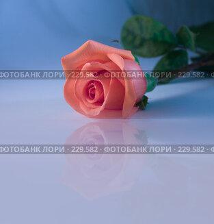 Купить «Роза на синем», фото № 229582, снято 28 января 2008 г. (c) Nelli / Фотобанк Лори