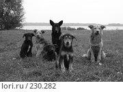 Купить «Семья», фото № 230282, снято 15 сентября 2007 г. (c) Книжников Борис / Фотобанк Лори