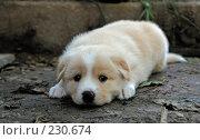 Купить «Детство», фото № 230674, снято 9 сентября 2006 г. (c) Синицын Андрей / Фотобанк Лори