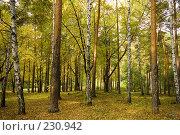 Купить «Желтый лес», фото № 230942, снято 22 сентября 2007 г. (c) Валерия Потапова / Фотобанк Лори