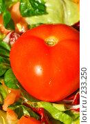 Купить «Свежий помидор в салате», фото № 233250, снято 28 января 2008 г. (c) Александр Телеснюк / Фотобанк Лори