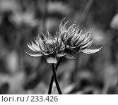 Купить «Два цветка», фото № 233426, снято 26 августа 2007 г. (c) Синицын Андрей / Фотобанк Лори