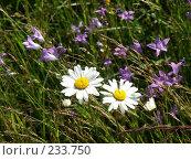 Купить «Полевые цветы», фото № 233750, снято 9 июля 2004 г. (c) VPutnik / Фотобанк Лори