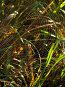 Паутина среди высоких трав. Утро, фото № 234482, снято 8 августа 2007 г. (c) Ольга Хорькова / Фотобанк Лори