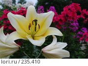 Купить «Цветы», фото № 235410, снято 4 августа 2007 г. (c) Нестерова Анна / Фотобанк Лори