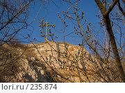 Купить «Верба», фото № 235874, снято 28 марта 2008 г. (c) Игорь Момот / Фотобанк Лори