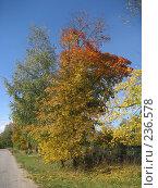 Купить «Очарование осени», фото № 236578, снято 23 сентября 2007 г. (c) Юлия Козинец / Фотобанк Лори