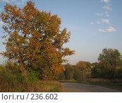 Купить «Дорога», фото № 236602, снято 29 сентября 2007 г. (c) Юлия Козинец / Фотобанк Лори