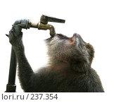 Жажда. Стоковое фото, фотограф Морозова Татьяна / Фотобанк Лори