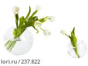 Купить «Букет белых тюльпанов в вазе и маленький тюльпан в маленькой вазе рядом», фото № 237822, снято 8 марта 2008 г. (c) Ольга Хорькова / Фотобанк Лори