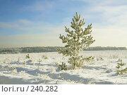Купить «Зимний пейзаж с сосной», фото № 240282, снято 10 января 2008 г. (c) Михаил Ушаков / Фотобанк Лори