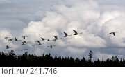 Купить «Лебеди улетают на юг», фото № 241746, снято 16 сентября 2007 г. (c) Андрюхина Анастасия / Фотобанк Лори