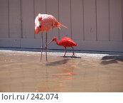 Купить «Две птицы на водопое», фото № 242074, снято 18 июля 2006 г. (c) Дима Рогожин / Фотобанк Лори