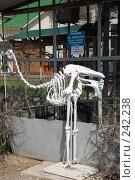 Купить «Скелет африканского страуса», фото № 242238, снято 27 марта 2008 г. (c) Лифанцева Елена / Фотобанк Лори