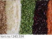 Купить «Подложка для фона из гречихи, риса, фасоли, гороха и чечевицы, освещенная заходящим солнцем», фото № 243334, снято 13 июля 2007 г. (c) Harry / Фотобанк Лори