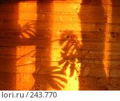 Купить «Тень», фото № 243770, снято 2 июля 2006 г. (c) Светлана Секерина / Фотобанк Лори