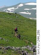 Купить «Группа конных туристов на высокогорных альпийских лугах плато Лаго-Наки Адыгея, Кавказ», фото № 244286, снято 19 июля 2007 г. (c) Виктор Филиппович Погонцев / Фотобанк Лори