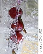 Купить «Замороженная вишня во льду, фрукты во льду», фото № 245502, снято 7 декабря 2007 г. (c) Виноградов Илья Владимирович / Фотобанк Лори