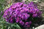 Поляна из цветов, фото № 245918, снято 28 апреля 2007 г. (c) Марина Шатерова / Фотобанк Лори