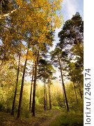 Купить «Золотой лес», фото № 246174, снято 22 сентября 2007 г. (c) Валерия Потапова / Фотобанк Лори