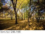 Купить «Осень», фото № 246198, снято 2 октября 2007 г. (c) Валерия Потапова / Фотобанк Лори