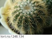 Купить «Кактус», фото № 248134, снято 28 марта 2008 г. (c) Юлия Смольская / Фотобанк Лори