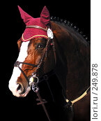 Купить «Голова спортивной лошади», фото № 249878, снято 25 сентября 2018 г. (c) Абрамова Ирина / Фотобанк Лори
