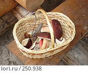 Купить «Корзинка с грибами», фото № 250938, снято 28 августа 2006 г. (c) Емельянова Светлана Александровна / Фотобанк Лори