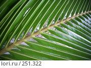 Купить «Пальмовые листья», фото № 251322, снято 8 февраля 2008 г. (c) Коваленко Ирина / Фотобанк Лори