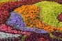 Цветочный фон, фото № 252530, снято 28 августа 2005 г. (c) Кравецкий Геннадий / Фотобанк Лори