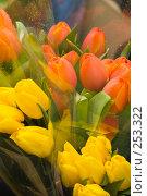 Купить «Букет тюльпанов», фото № 253322, снято 4 марта 2008 г. (c) Биржанова Юлия / Фотобанк Лори