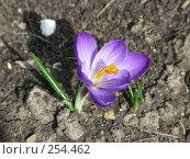 Купить «Голубой цветок», фото № 254462, снято 8 марта 2008 г. (c) Олег Дрыго / Фотобанк Лори