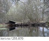 Купить «Сотни лет простоял...  (Долина реки Уборть)», фото № 255870, снято 9 апреля 2008 г. (c) Мещенко Олег / Фотобанк Лори